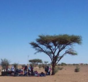 People sitting by a tree in the desert