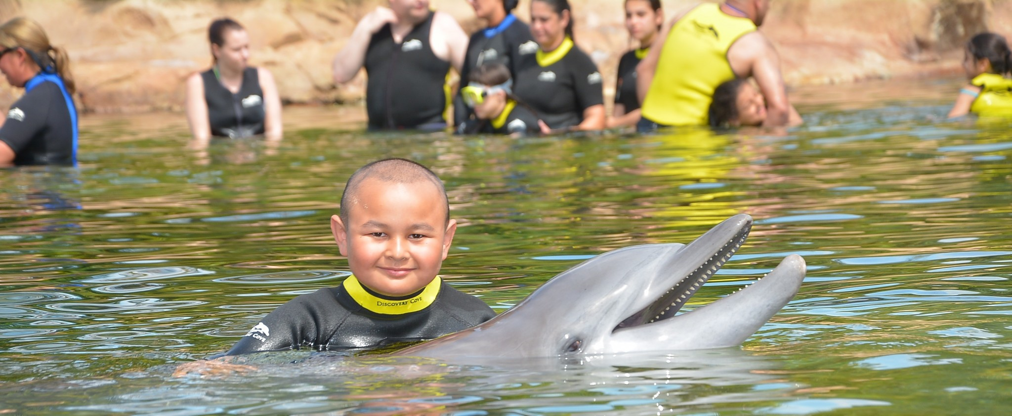 dyaln with dolphine