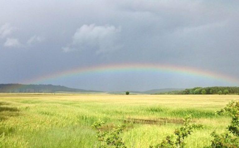 rainbow-over-cornfields